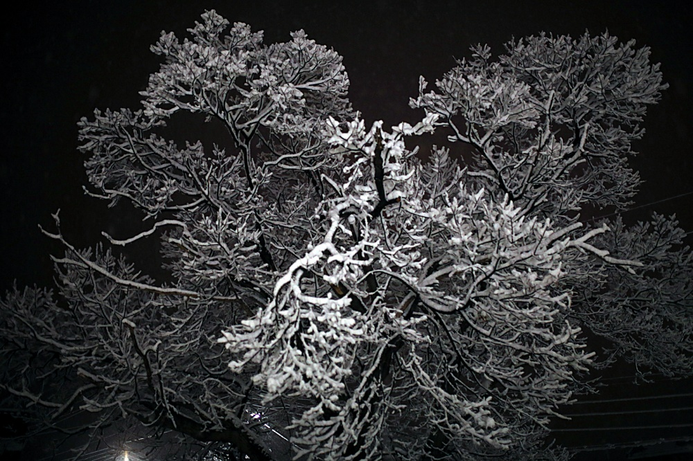 Snow-&-nut-tree_1600px.jpg