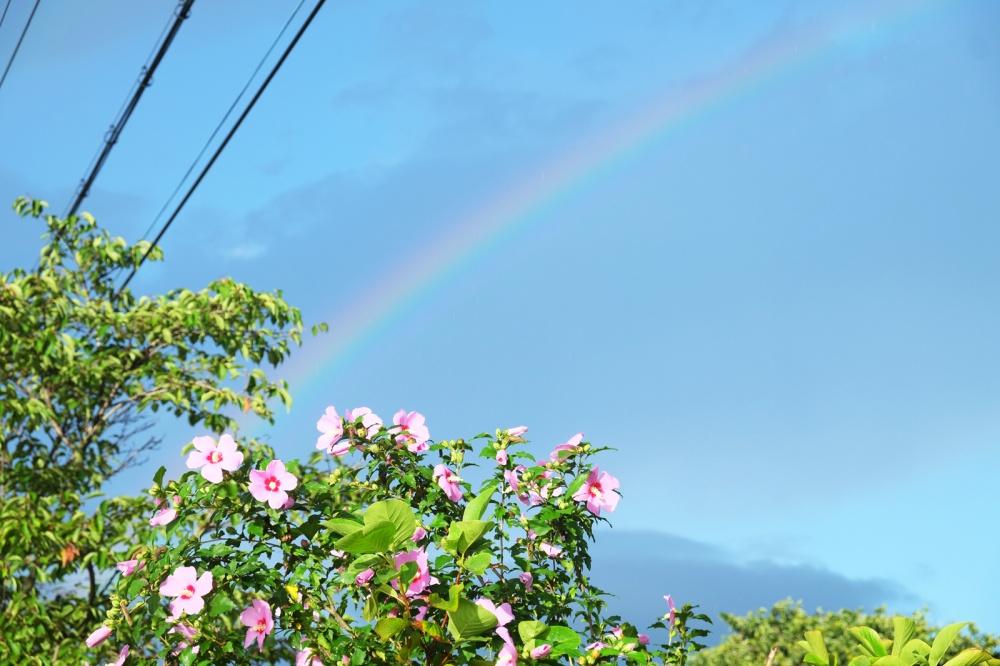 Rainbow-&-Mukunghwa_2017AUG11_1600px.jpg