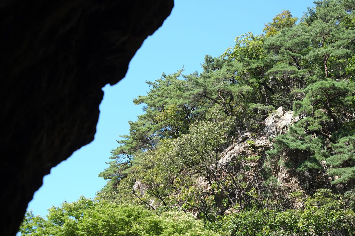 Pine-Tree_Mt-Soyo_2018SEP24_1400px.jpg