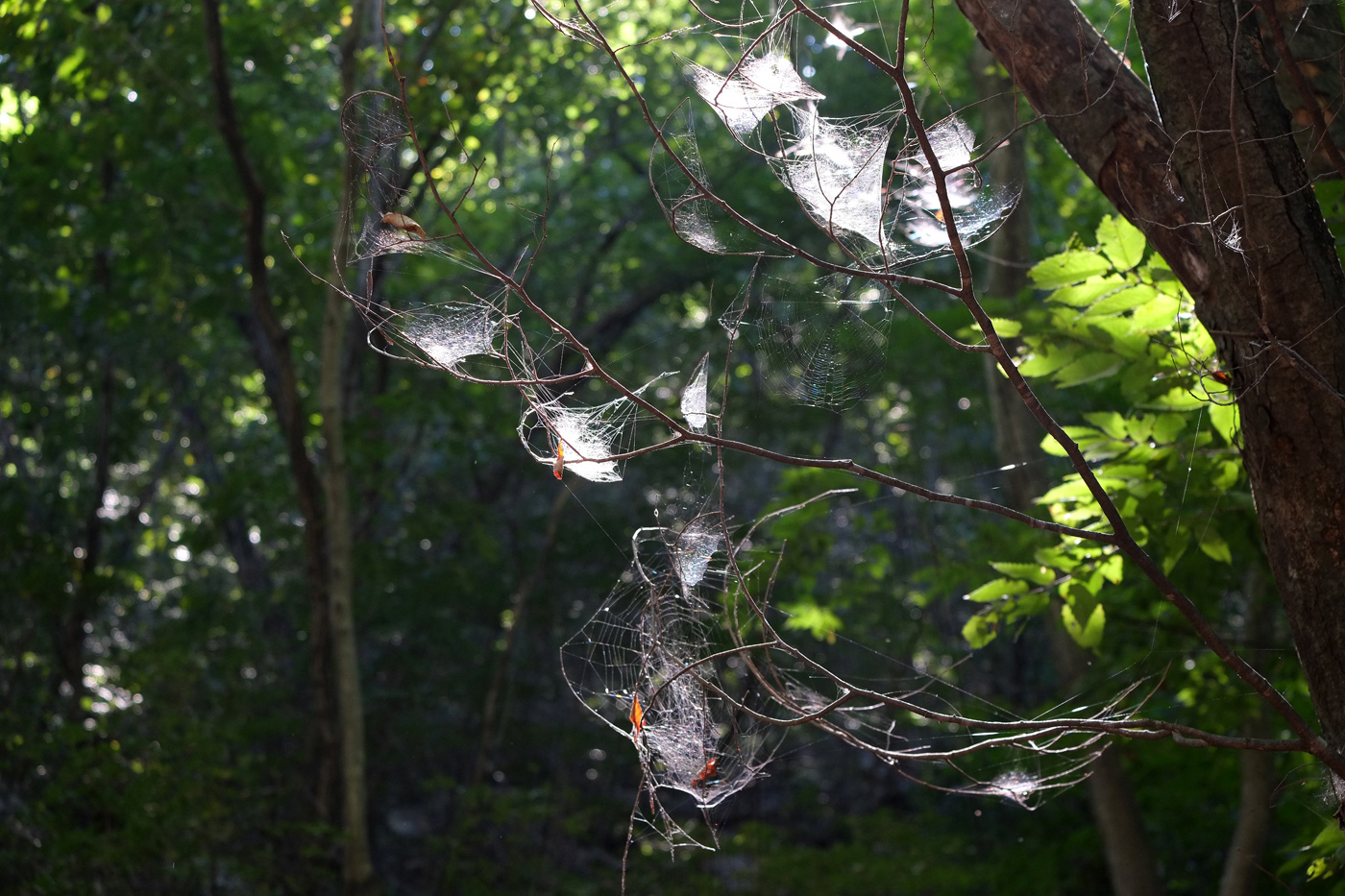 Spider's-Web2_Mt.-Soyo_2018SEP24_1400px.jpg
