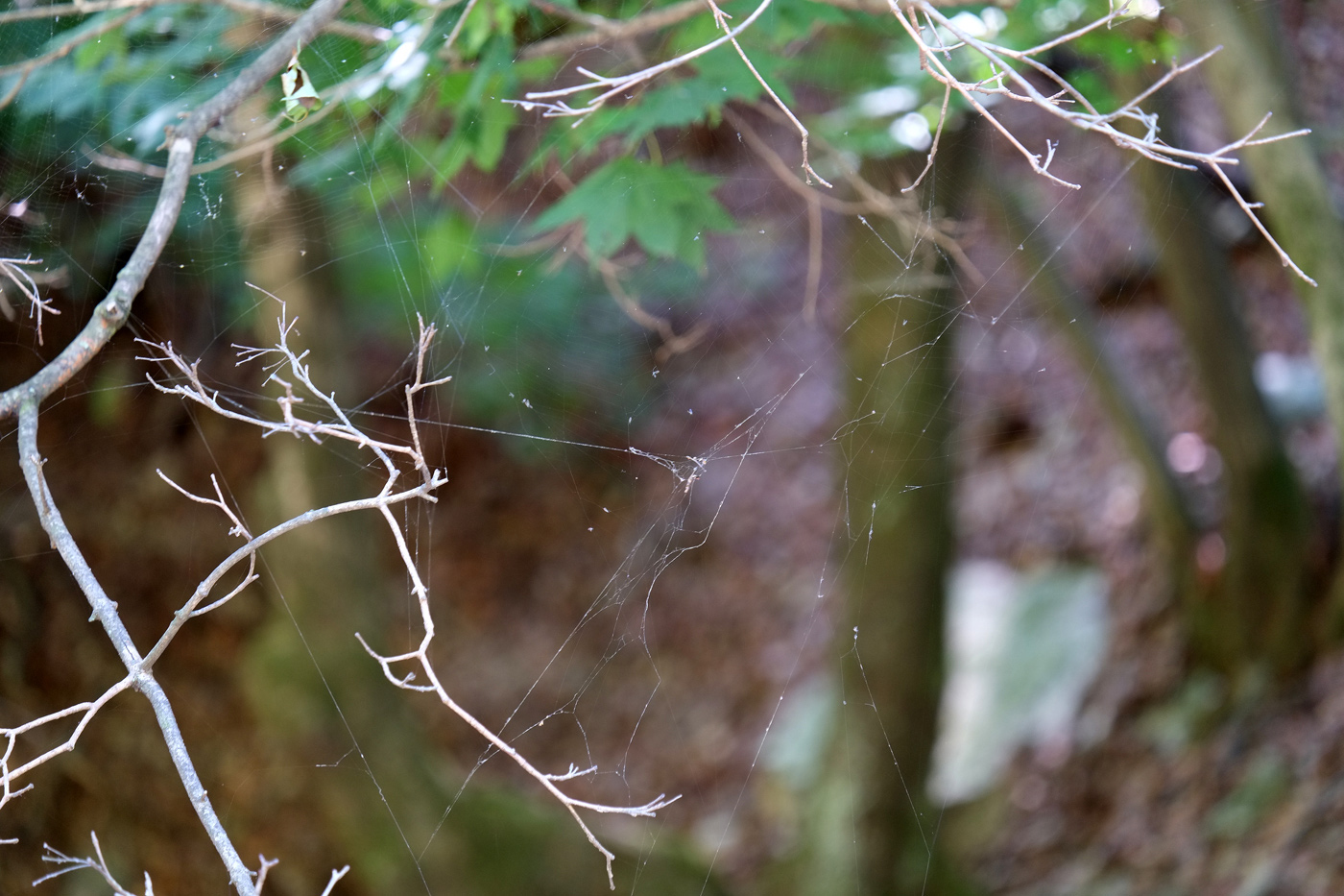 Spider's-Web_Mt.-Soyo_2018SEP24_1400px.jpg