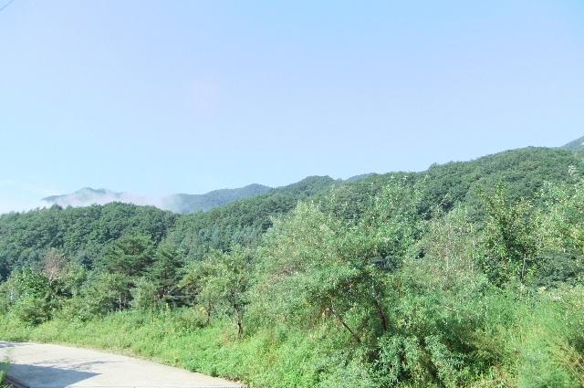 화사한 아침주변풍경.JPG